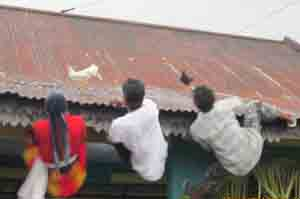 Berebut Ayam Dalam Tradisi Mondosiyo